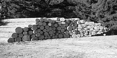 Forstwirtschaft | Die Rechtler