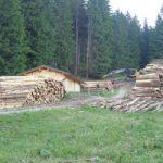 Holzeinschlag Hochleite | Die Rechtler