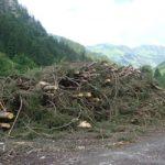 Holzeinschlag Traufbachtal | Die Rechtler